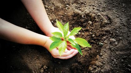 plant-jpg